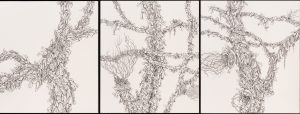 Polylepis trees
